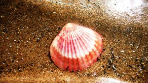 Zsh is shell, de nem ilyen :)